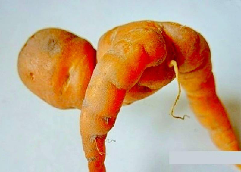 Морковка для анальной пробки