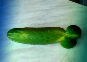 Фото: длинный член из огурца. анальная секс-игрушка